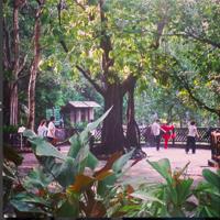 Singapore Gardens 1