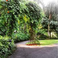 Singapore Gardens 2