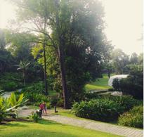 Singapore Gardens 3