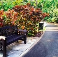 Singapore Gardens 4