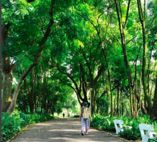 Singapore Gardens 7
