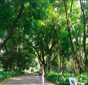 Singapore Gardens 8