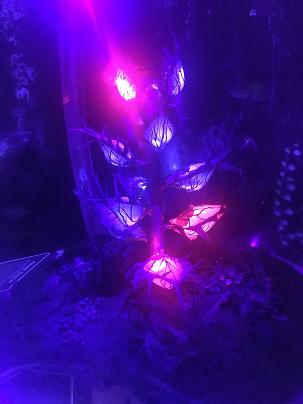 Pandora from Avatar
