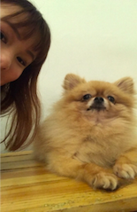 Pomeranian at We're the Furballs in Singapore